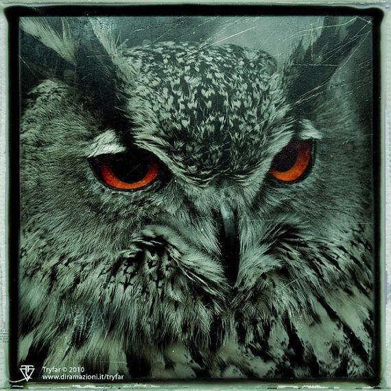 Owl   Gufo PRINT  you choose size by Diramazioni on Etsy