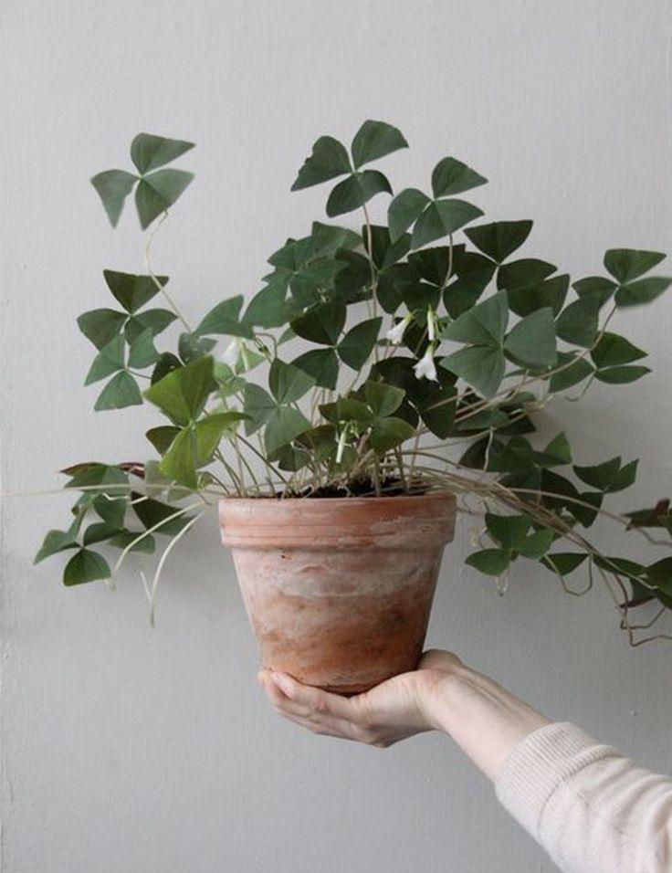 Le 25 migliori idee su piante da appartamento su pinterest for Porta piante da interno