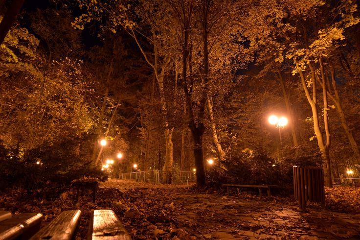 It's night and autumn