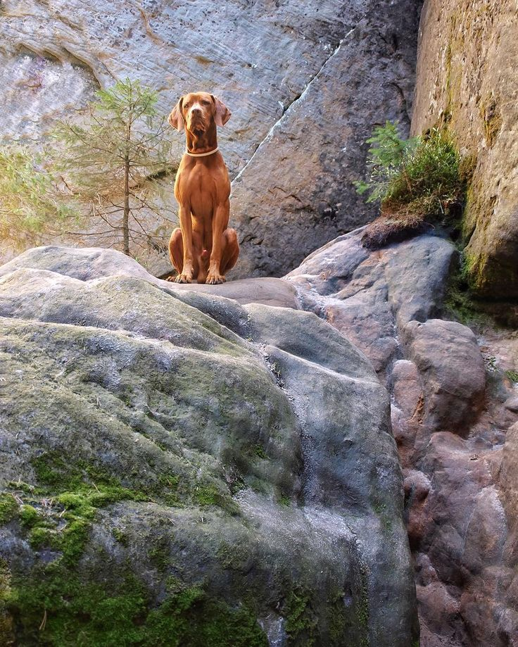On the rock #tags4likesapp #animal #photooftheday #собакевич #vscocze #cute…
