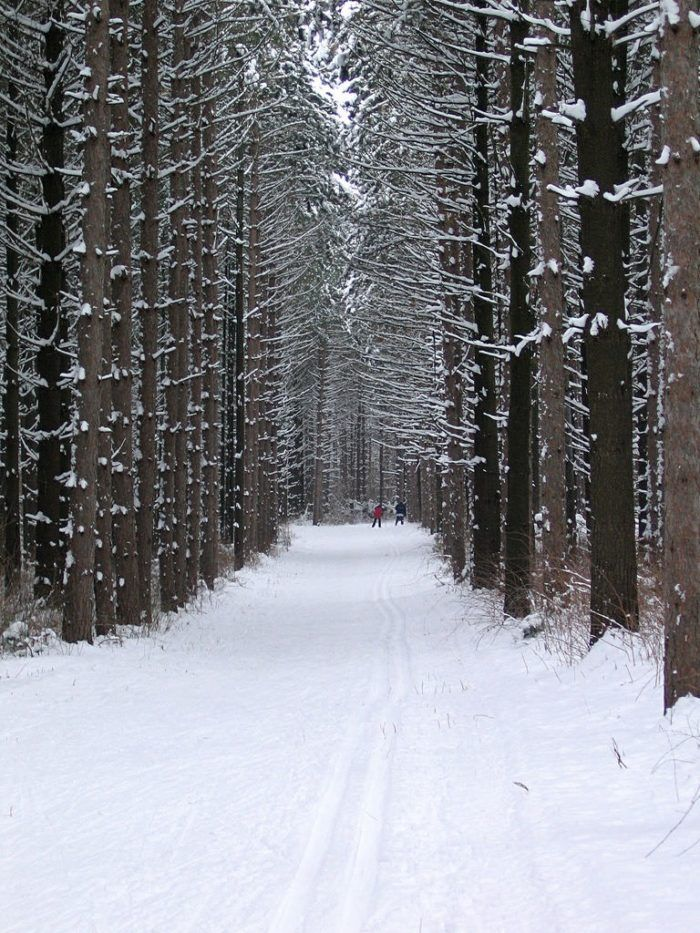 11. Nordic Trail in Kettle Moraine - 15 Trails everyone must hike in Wisconsin