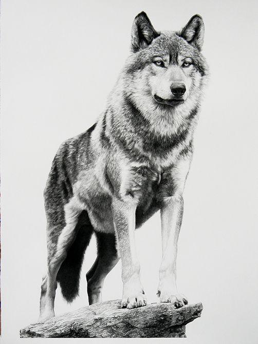"Alpha by William Harrison Wolff Carbon Pencil ~ 41"" x 29.5"""