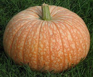 One Too Many ...Pumpkin variety. Love this pumpkin