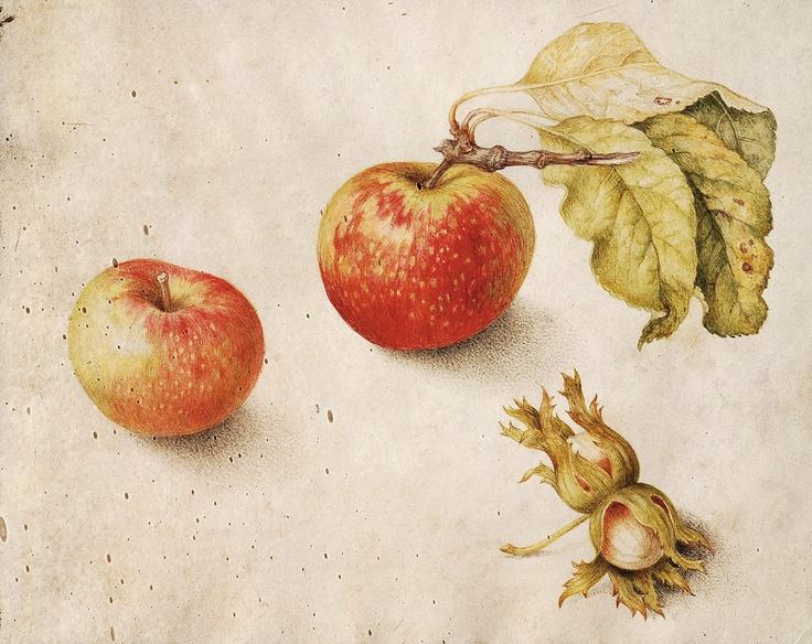 """""""Natura morta con mele e nocciole"""" tempera su pergamena (20x24,5) Giovanna Garzoni (Ascoli Piceno 1600 - Roma 1670)"""
