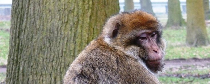 Take a walk on the wild side and visit Woburn safari park!