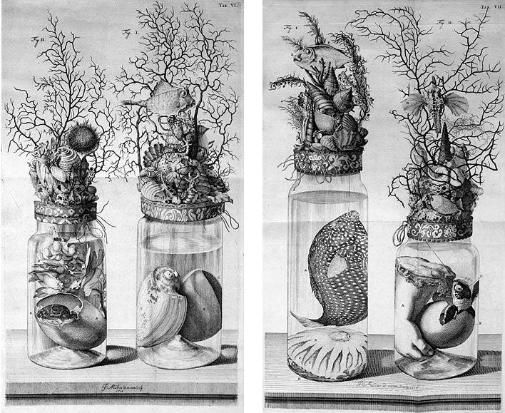 Frederik Ruysch | Frederik Ruysch, The Specimen Jars , Thesaurus Animalium Primus ...