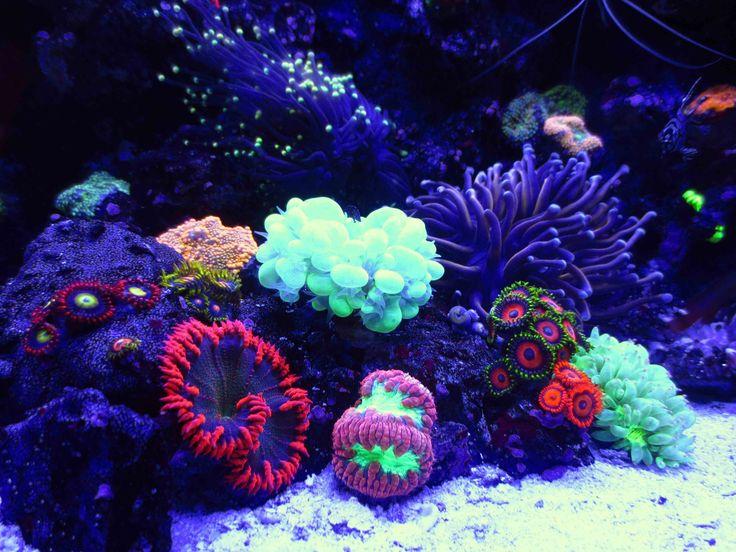 Check out my Coral Reef Saltwater Tank Nano Aquarium: http://youtu.be/ZsaxN9SXpxA