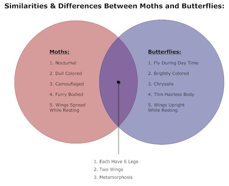 butterflies  u0026 moths venn diagram