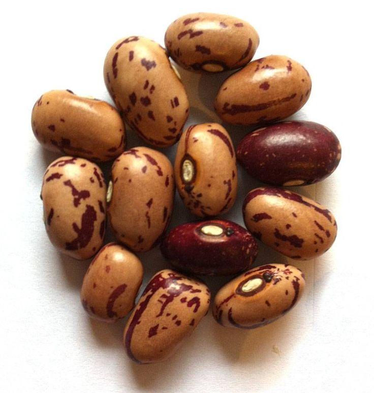 Boon Drentse Kievitsboon , zie ok http://www.eetbaretuin.info/groente/groente/files/Kievitsboon.html
