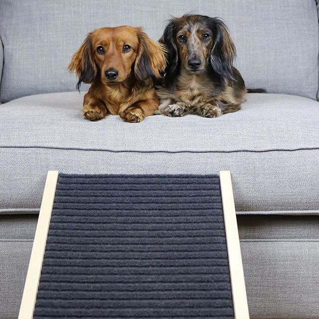 Home Made Dog Ramp For Dachshunds Or Other Small Dogs To Go Up And