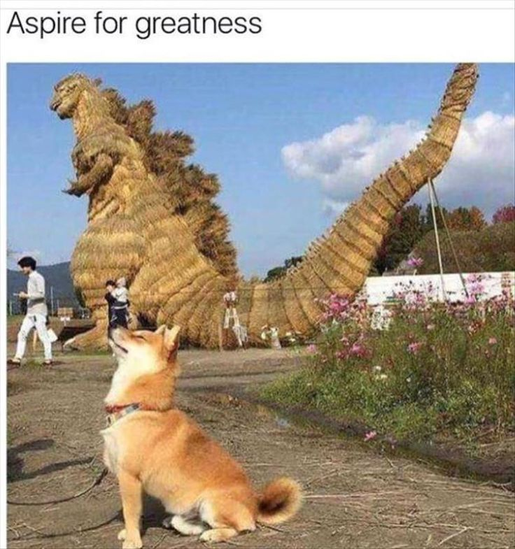 Funny Animal Pictures #1