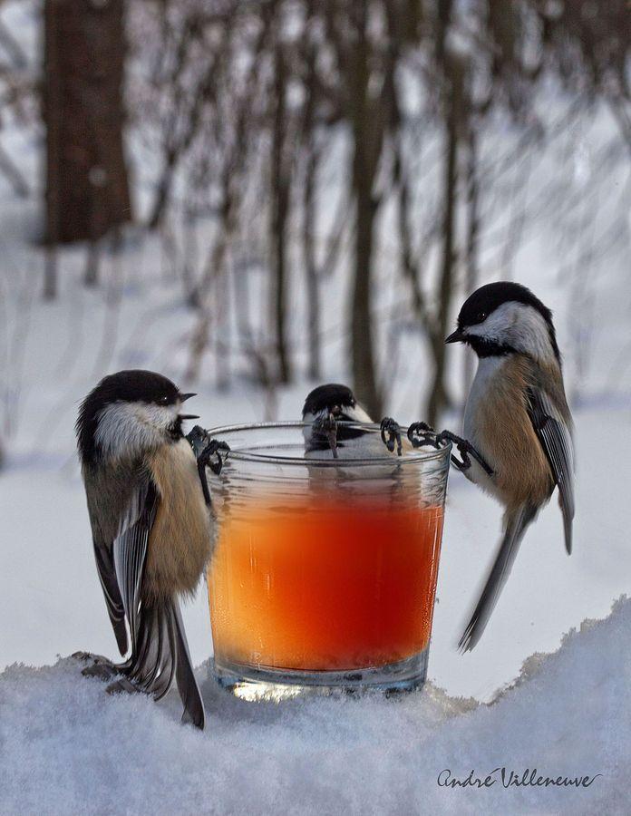 A madarak etetése télen
