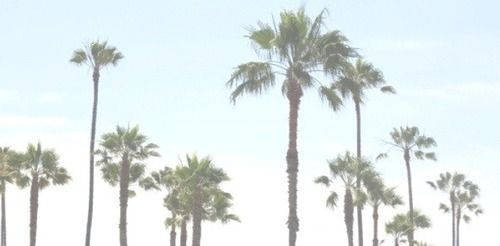 palm trees tumblr header. Twitter Header // Palm Trees #3 | Headers Pinterest Header, And Tumblr