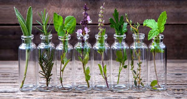Herbs normally have culinary, medicinal, and relaxation properties. As such, it can be great if you have a constant supply of them throughout the year.  You can achieve this by growing some of the herbs in the kitchen. Here, we present you an amazing technique of growing the herbs, which doesn't require regular watering …