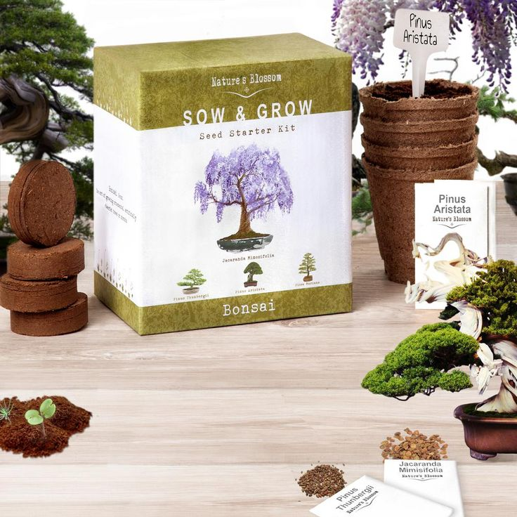 Bonsai Trees Indoor Plants The Home Depot In 2020 Planting Pots Bonsai Miniature Trees