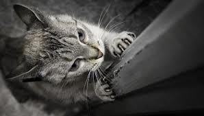 Cómo evitar que el gato arañe los muebles