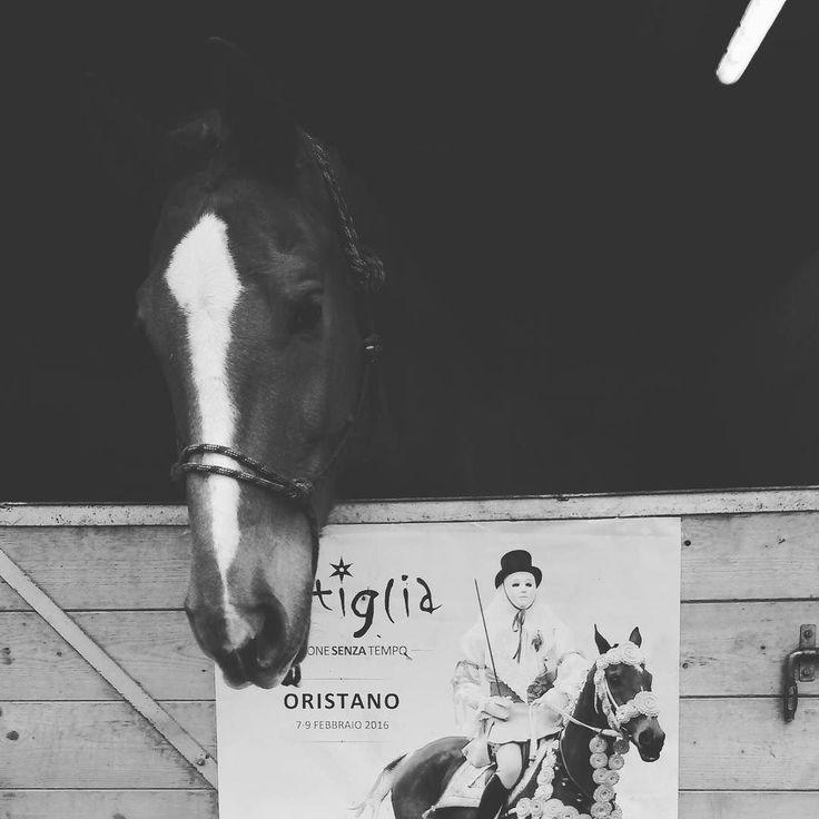 Pariglie: #sartiglia2016 di #oristano #carnevale #Sardegna #cavalli #blackandwhite #biancoenero #diegocotza #maschera #componidori #corsaallastella #pariglie - via http://ift.tt/1zKqJ1x