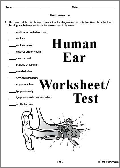 3 page human ear worksheet or test answer key can also be downloaded science pinterest. Black Bedroom Furniture Sets. Home Design Ideas