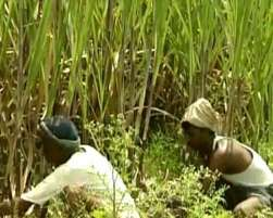 Accusing Rajasthan government of working against the interests of farmers, a Congress MLA on Saturday alleged irregularities in assessing damage to crops in his constituency in Jalore district during the last Kharif crops season.