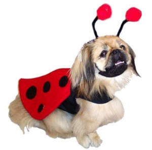 Big Dog Halloween Costumes For Large Dogs