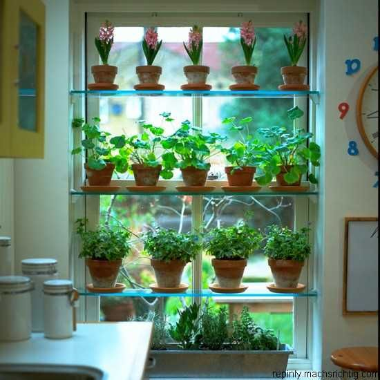 124 Best Indoor Window Gardens Images On Pinterest | Indoor Plants, Indoor  Herbs And Gardening