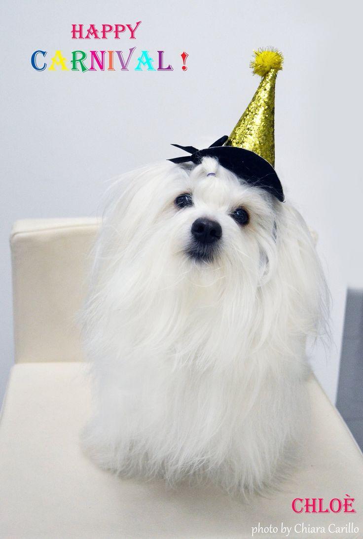 Happy carnival from Chloe' Coton de tulear!