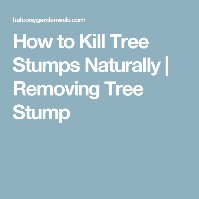How to Kill Tree Stumps Naturally | Removing Tree Stump