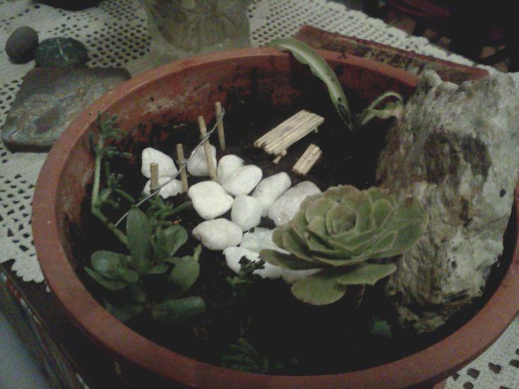 Mi primer mini jardín -