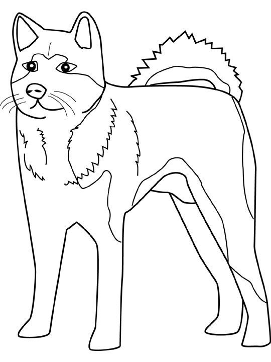 dog color pages printable husky coloring sheets