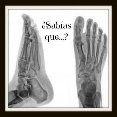 El pie cuenta con el 25% de los huesos del cuerpo humano. En total son 26 huesos en cada pie, 52 entre los dos. Los pies son una parte fundamental de nuestro cuerpo porque nos dan movilidad y soportan nuestro peso, por ello tienen un esqueleto complejo pero bien desarrollado.