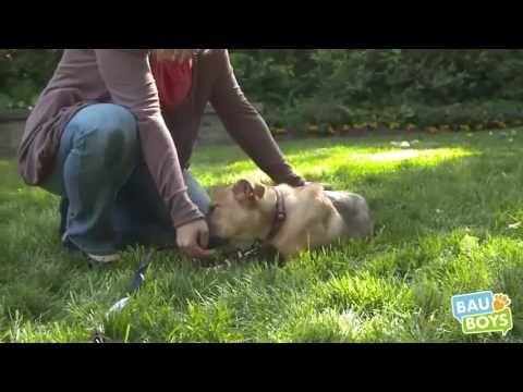 Come correggere l'aggressività di un cane mentre mangia? - YouTube