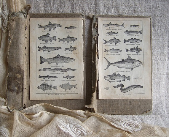 RESERVED for CS 2 Vintage French book prints illustration FISH