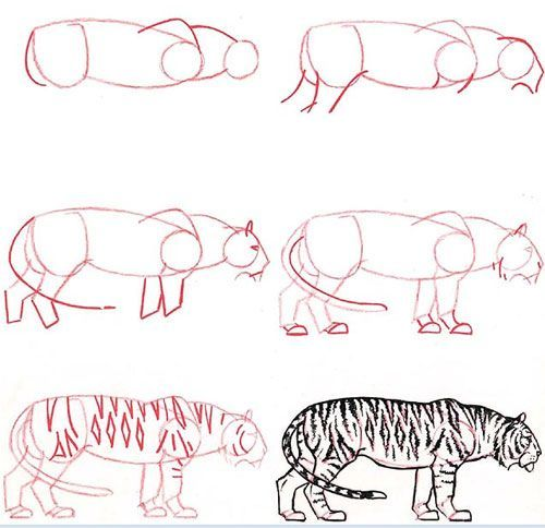 Resultado de imagen para como dibujar animales paso a paso a lapiz