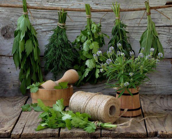 Петрушка, укроп, сельдерей–пряные травы, отлично дополняющие многие блюда, придающие им неповторимый вкус, аромат иизысканную пикантность. К сожалению, сезон свежей зелени подходит к концу, поэтом…
