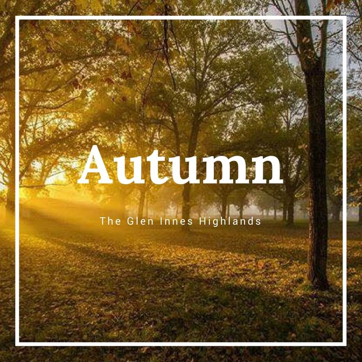 We have been getting a few messages asking us when the best time is to view the autumn leaves.  Traditionally the best time is a week or so, either side of Anzac Day.  However, it is completely up to the weather so this can change, though it is a good indication of when the peak of the season usually is.  What we recommend doing is continue keeping an eye on this Facebook Page as we will keep sharing photos of the autumn leaves as they change.  Also, if planning a trip to Glen Innes just…