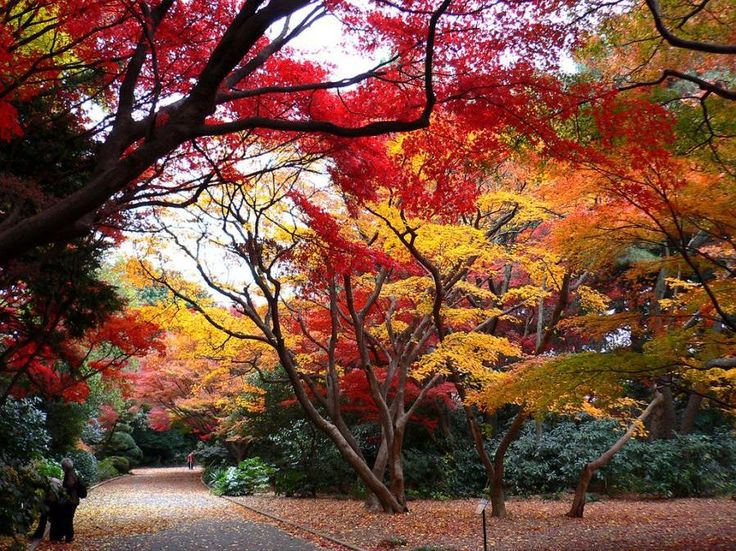 8 wonderful things you should know about Shinjuku Gyoen National Garden in Tokyo