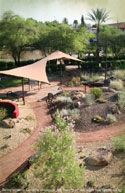 xeriscape demo gardens: Glendale Public Library; West Valley (near EPCOR); Peoria's Desert Fusion; Maricopa Co. Cooperative Extension; Desert Botanical Gardens