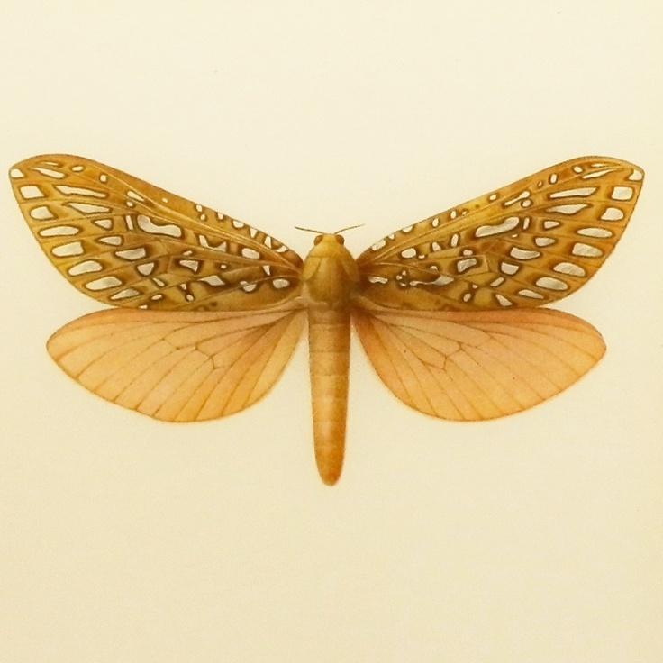 P Moth Decorator 17+ images about Moths...