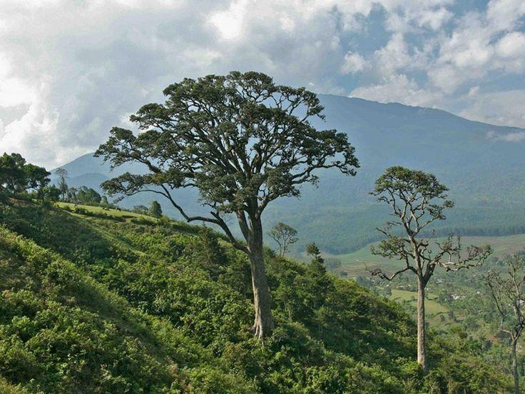 Intanki National Park - in Nagaland, India
