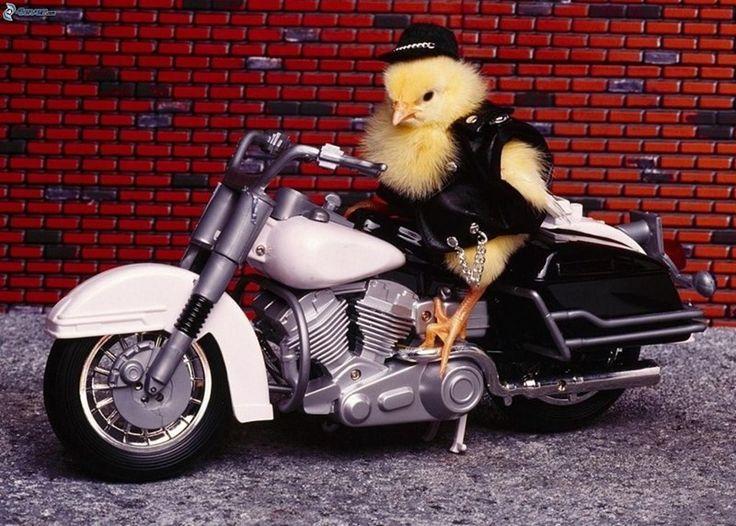 Biker Animals – 24 Pics