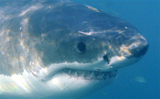 Western Australia shark beach safety