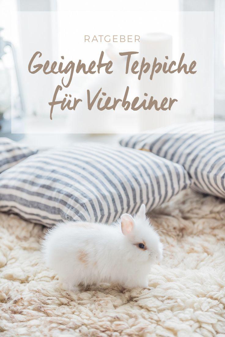 Teppiche bei Haustieren - Alle Infos im benuta Blog