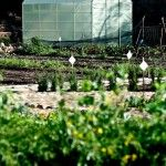 New 2m x 4m Greenhouse at Oranjezicht City Farm.  Cape Town, South Africa. http://urbanfreedom.co.za/2013/08/ozcf-installation-greenhouse-envy/