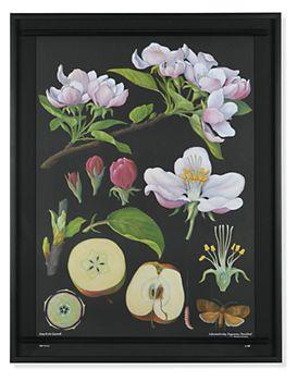 Vintage German Apple Botanical Plate - Plant Lifecycle - Room & Board