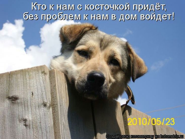 Кошки, картинка собаки с надписью теперь перезимуем а теплых будках