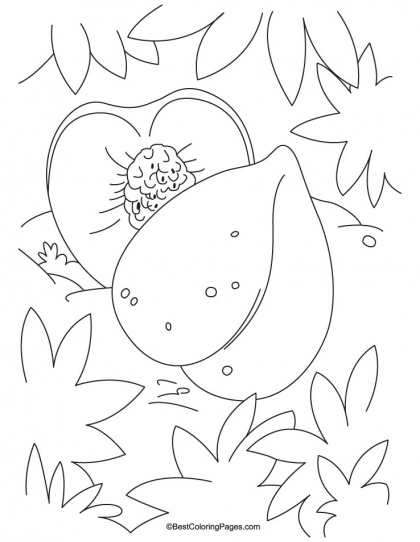 7 best Orange Coloring Pages images on Pinterest  Coloring pages
