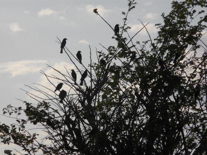 Pássaros do Sertão do Ceará