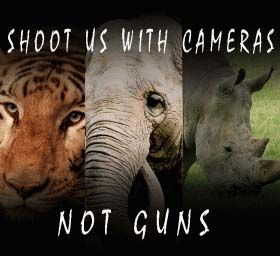 Shoot Us With Cameras, Not Guns  Make the earth a better place to live in.  https://www.facebook.com/KricpyKhera1  #kricpyKhera #kricpy #khera #noise #pollution #earth #stop #Environment #girlchild #save #trees #wildlife #city #green #clean #rainforests #bigcats #elephants #review #Naturecomplaint #natureCase #rain #forest #smoking #polarbear #childlabour #labour #earth #saveearth