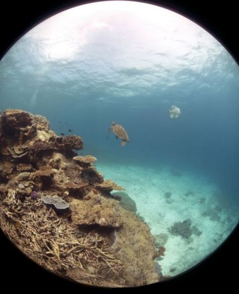 Google Underwater View