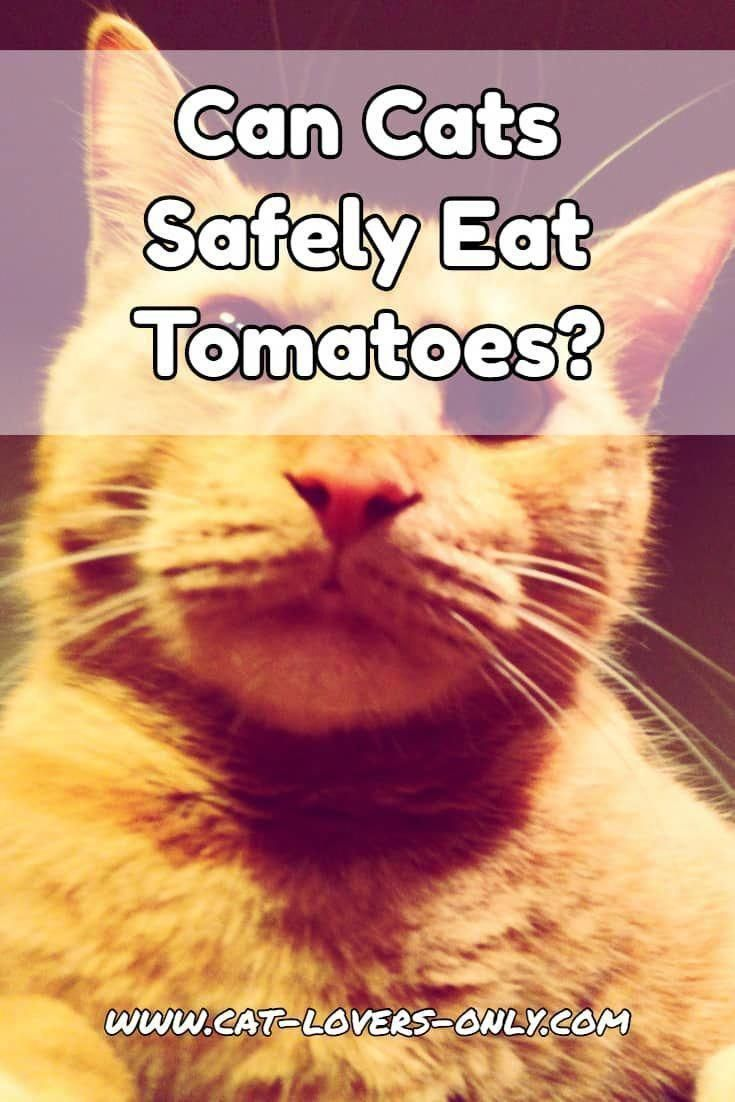 Cats To Adopt Nyc Catswallpaper Mainecooncats Cat Nutrition What Cats Can Eat Can Dogs Eat Tomatoes